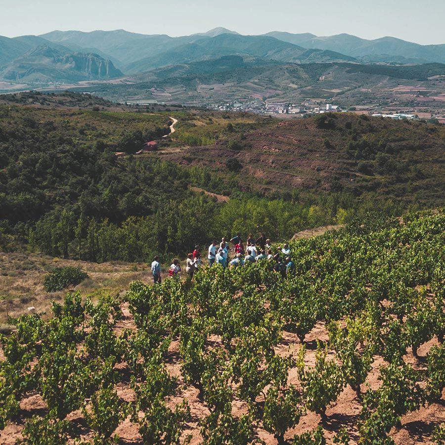 Visita a bodega de Rioja más viñedo