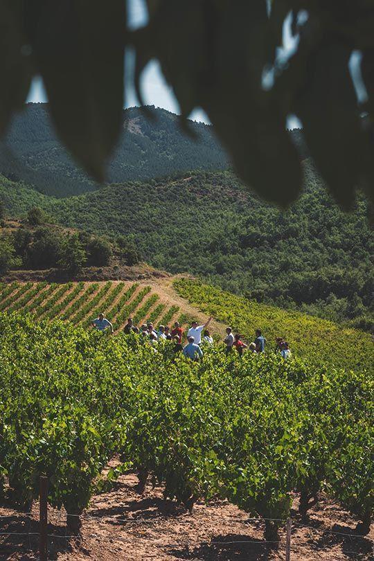 Visita a viñedos de Rioja